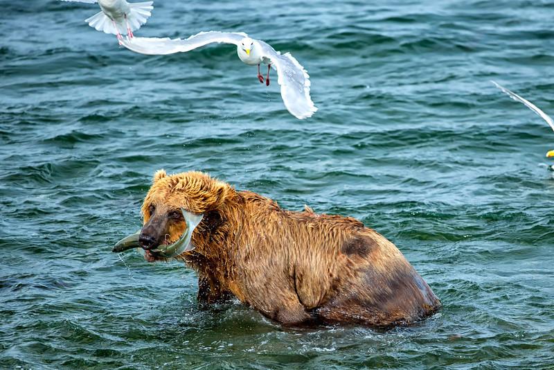 Alaska_2013_FH0T9614-2.jpg
