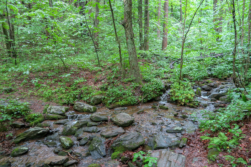 Buck Spring Trail @ Bearwallow Brook -- 3,690'