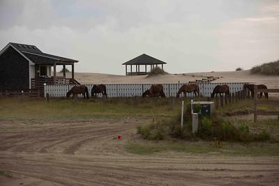 wild horses low res