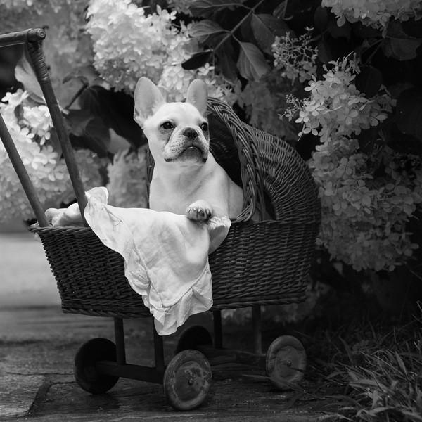 Finn baby carriage ajs-8.jpg