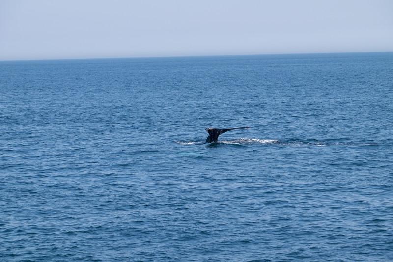 humpbacks-6291.jpg
