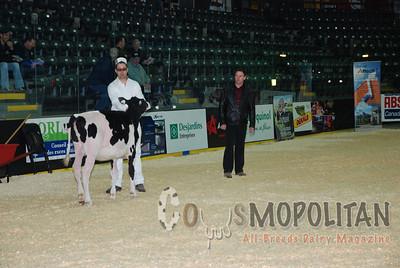 Quebec Spring Holstein Hfrs 15
