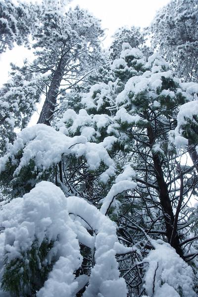 Family_012117_Yosemite_7004.jpg