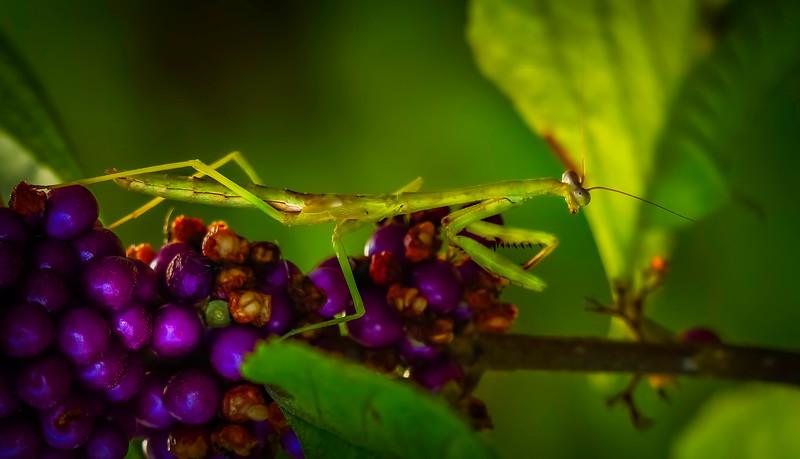 Bugs and Beetles - 194.jpg