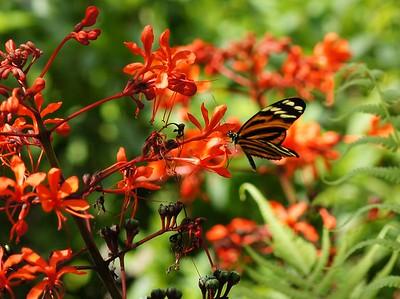 Fairchild gardens 32815
