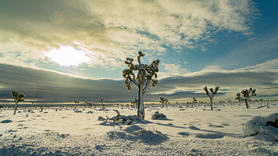 SNOW IN JOSHUA TREE NATIONAL PARK