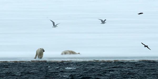 Svalbard 2019
