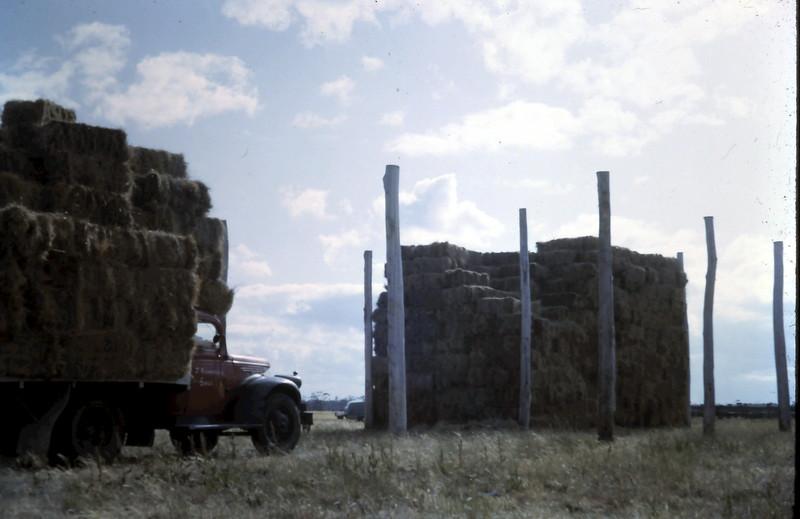 1964-12-6 (19) Carting hay.JPG