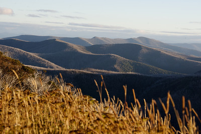 Undulating hills at Mt. Hotham, Victoria Australia.