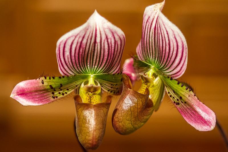 Orchids-02.jpg