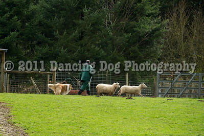 PNW Herding Trial March 2011