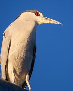 Malibu birds