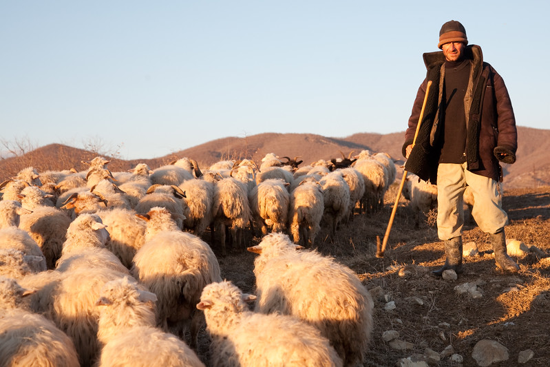 Manavi, Georgia - January, 2008: Shepherd and his flock of sheep near the town of Manavi in the Kakheti region of Georgia. (Photo by Christopher Herwig)