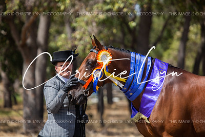 Pinjarra Equestrian Association Autumn All Breeds Spectacular 2019