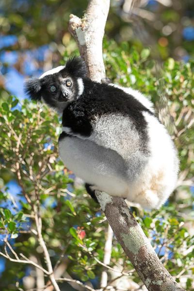 Madagascar_2013_FH0T9401.jpg