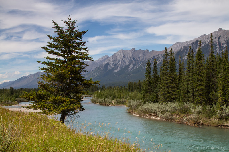 trees, mountains, along the Bow River