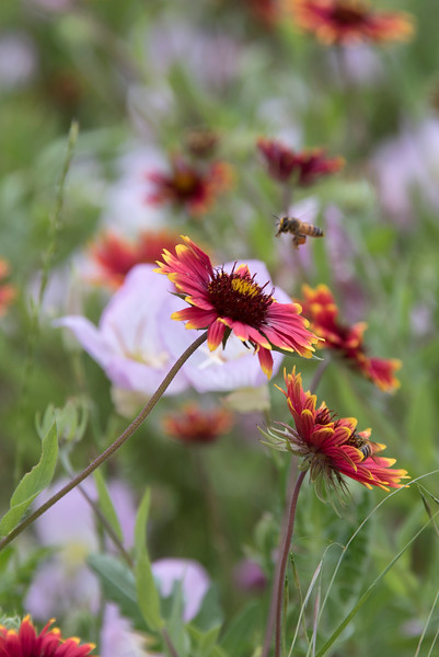 wildflowers042019.jpg
