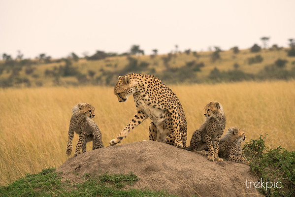 The Maasai Mara