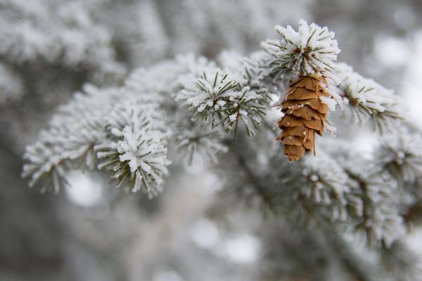 2-22-19 February Snowstorm