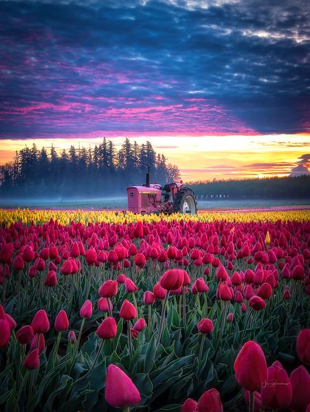Pink Tractor-2.jpg