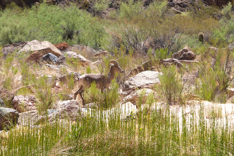 2014_Grand_Canyon_WHDW2_7D 62