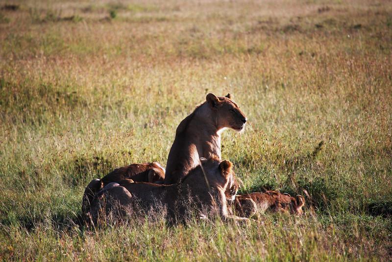 Serengeti (104).JPG