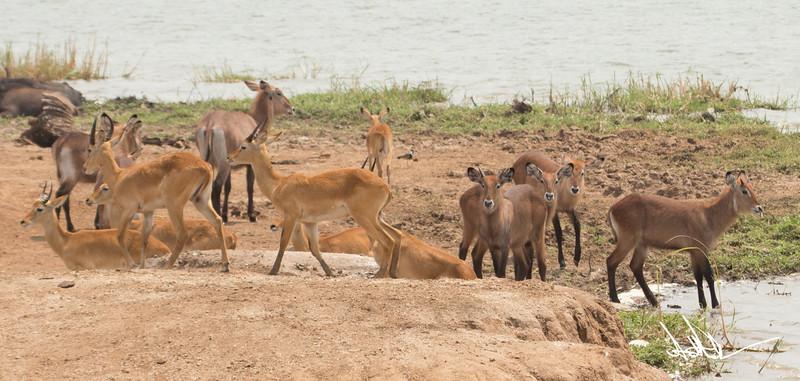 AntelopeS-19.jpg