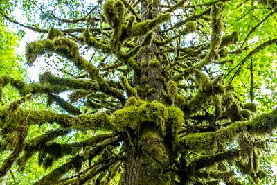 Oregon Landscape Nature 2021