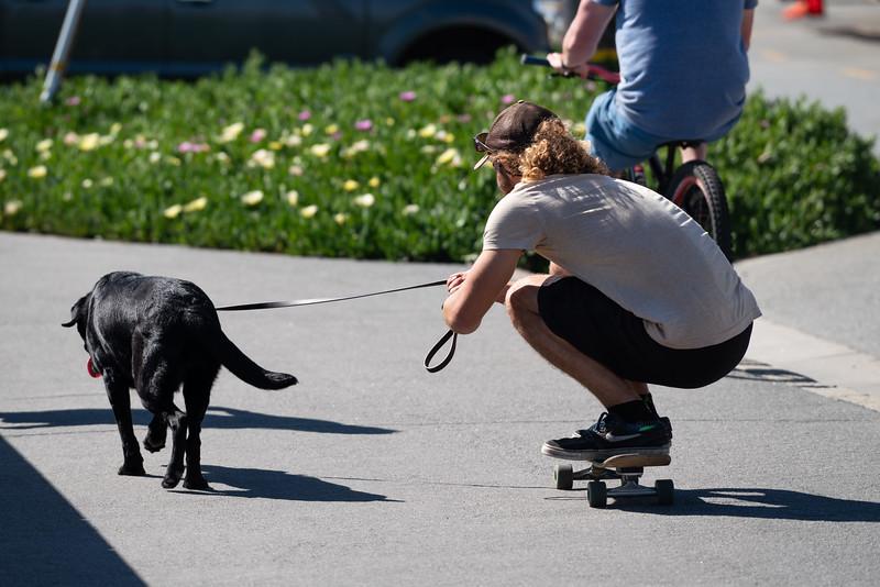 Dogs-169.jpg