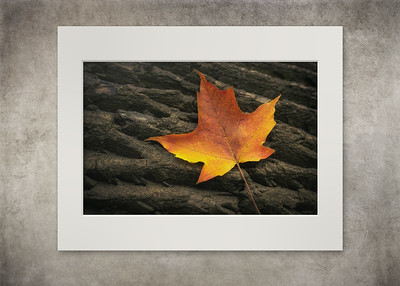 Maple Leaf - $12