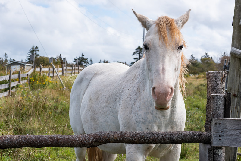 lovely horse along the way