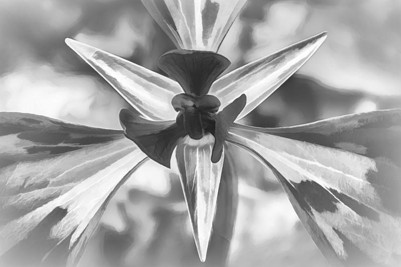 Carl Simmerman-Red Trillium BW.jpg