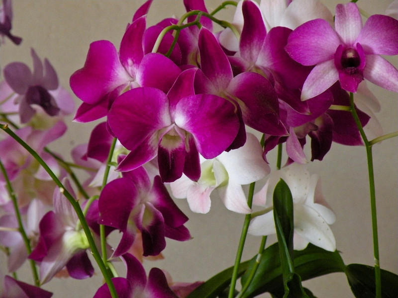 Orchids in the hotel lobby