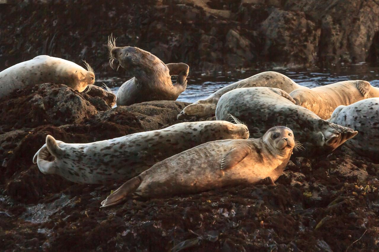 Pat's Seals