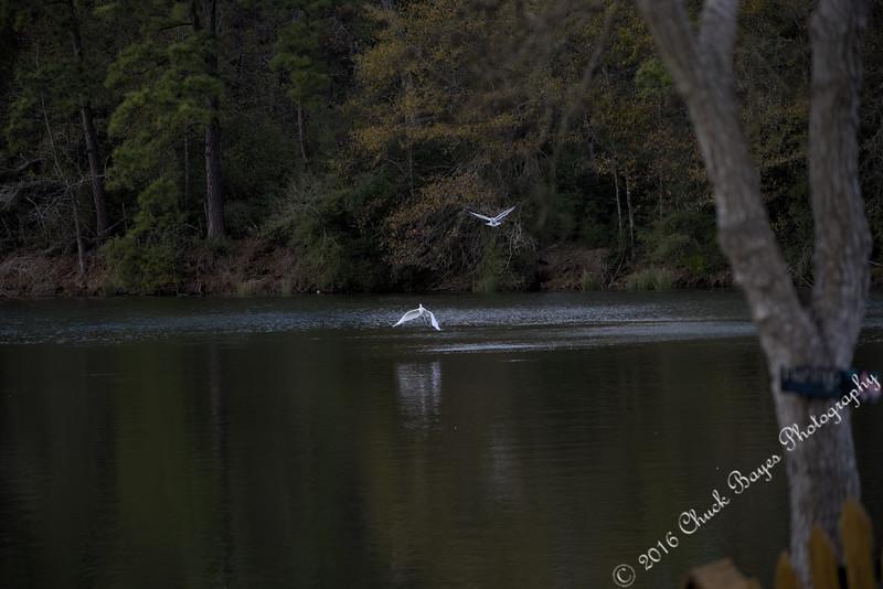 Lake2016-51 (2).jpg