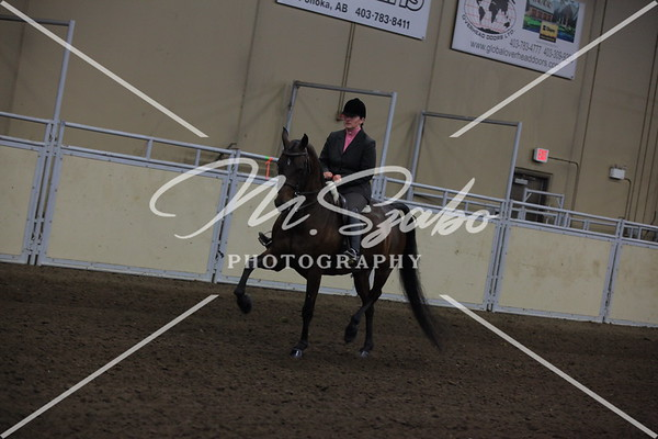 All Breed Hunter Pleasure Limit or Junior Horse