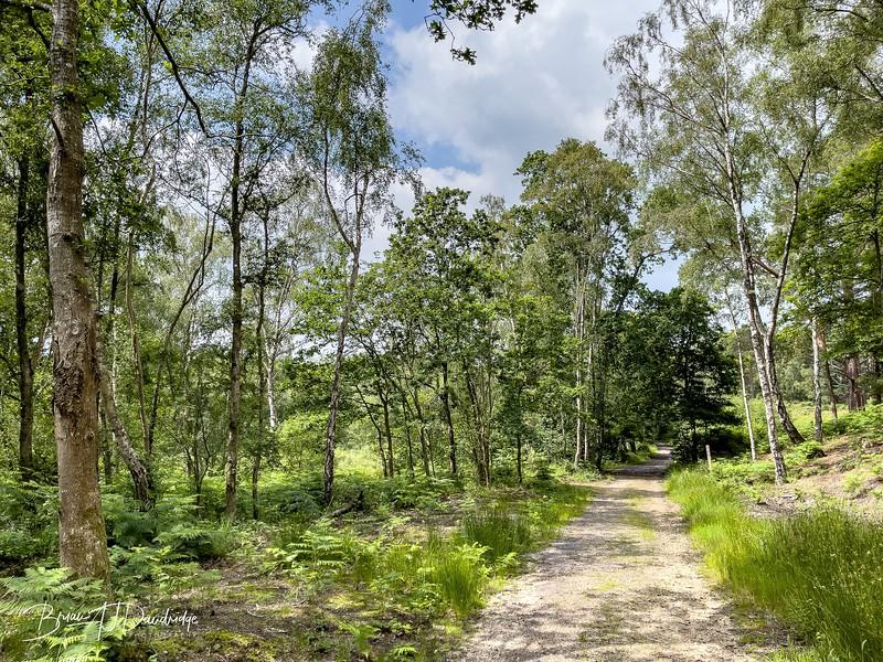 Burton Mill Pond-1132-1.jpg
