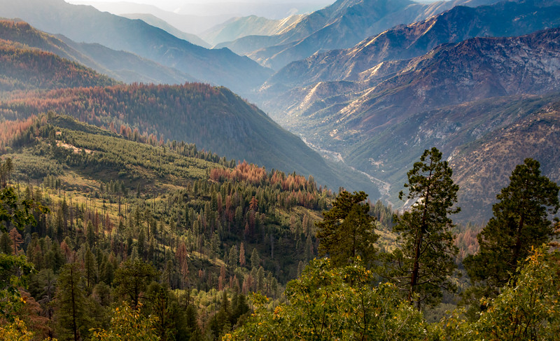 Yosemite Canon View
