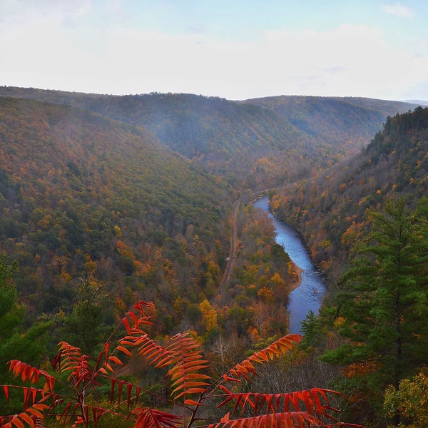 Fall Colors in the Grand Canyon of Pennsylvania