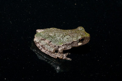 Frogs Outside My Home