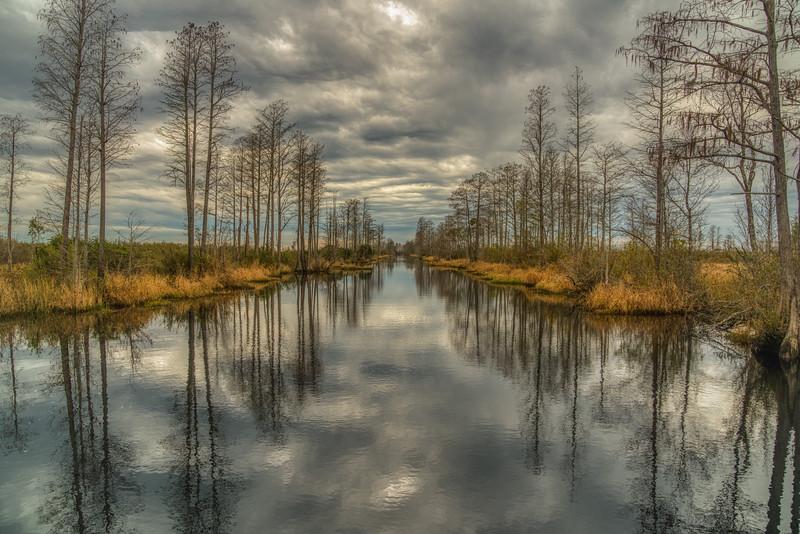 Okeefenokee Swamp 2020-14.jpg