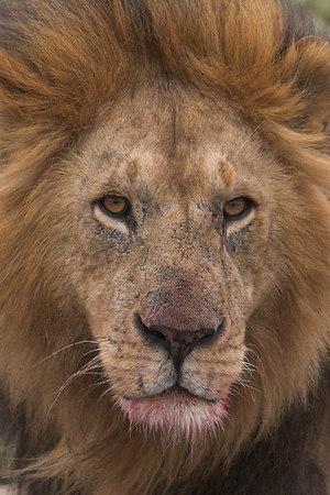 2006 E. Africa Safari - Day 7 (Masai Mara N.R. & Amboseli N.P.)