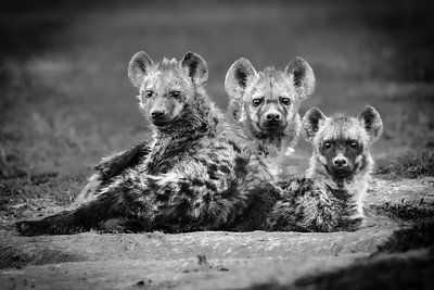 Wildlife - Ol Pejeta, Samburu, Masai Mara - April 2018