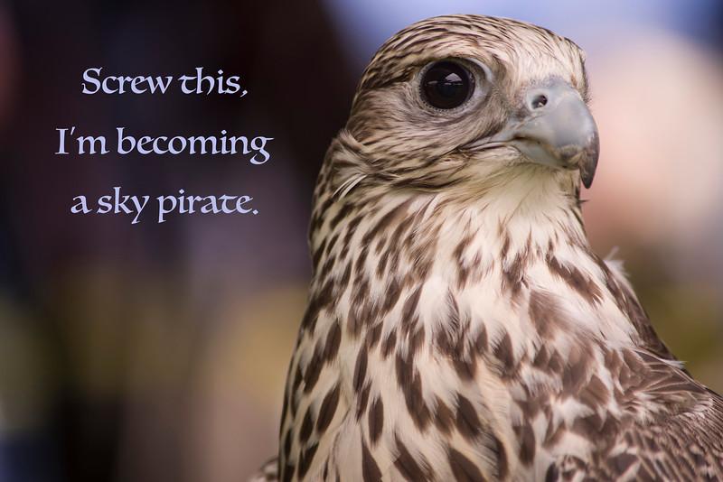 sky pirate.jpg