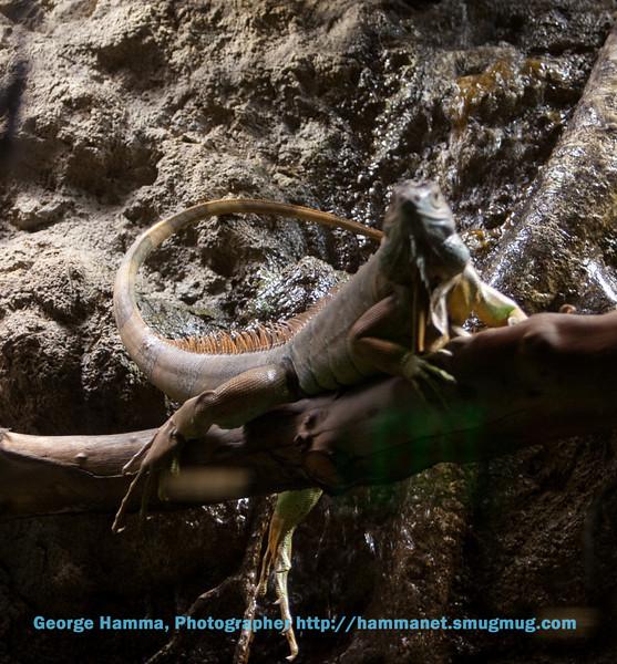 A fantastic lizard.