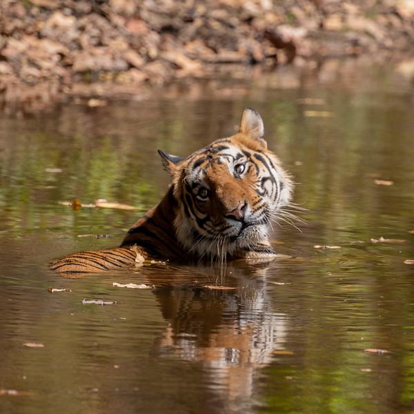 India_April_2019-1003.jpg
