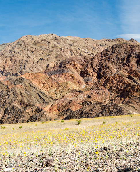 Death-Valley-south-entrance-sunflowers-spring-april-2017.jpg