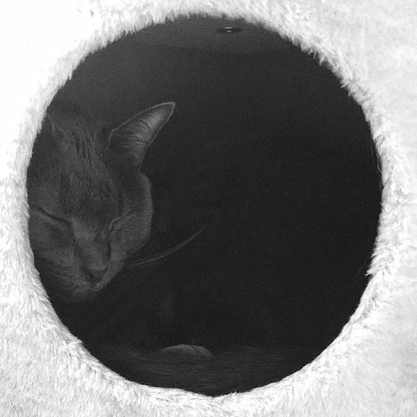 #catnap