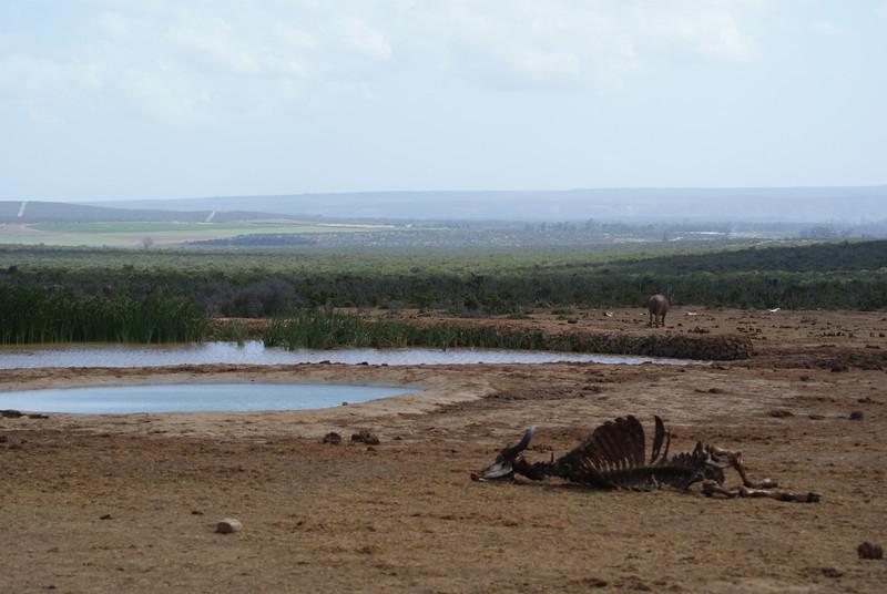 Addo Elephant Park.  That buffalo carcass still had a bit of meat on it.