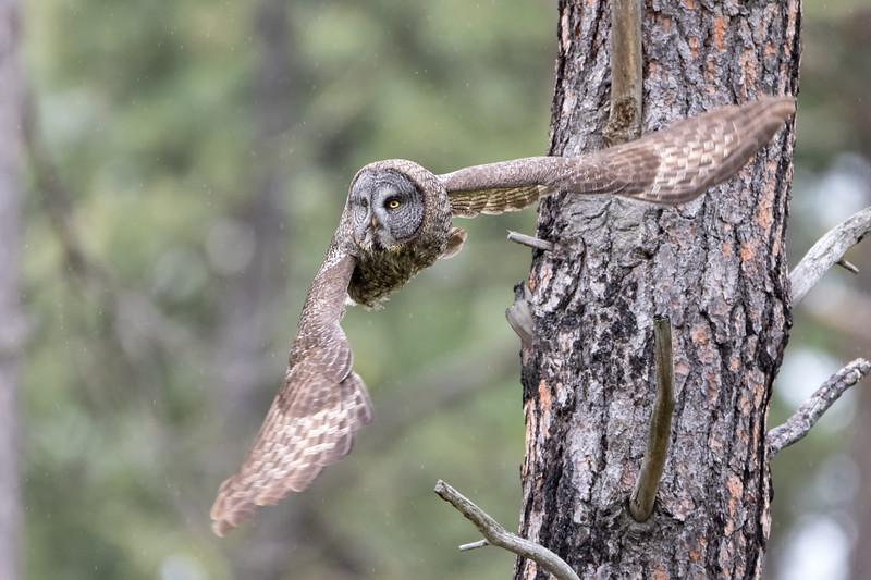 Silent Hunter in flight